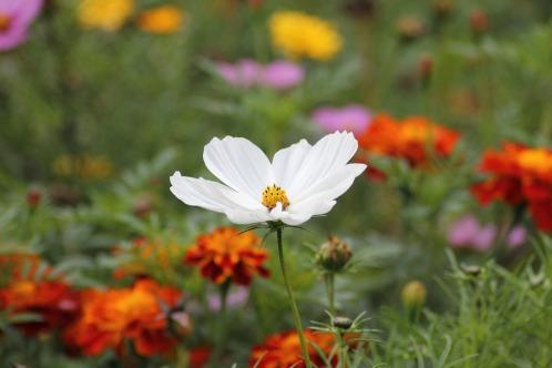 white-blossom-184571_960_720