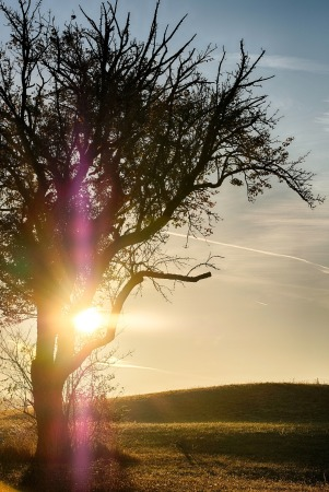 tree-3726580_1920.jpg